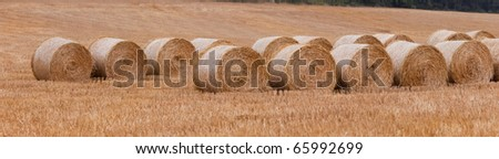 bales of straw after harvest