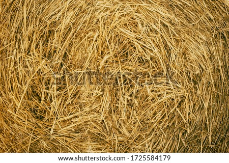 Bales of straw are illuminated by the sun. Macro photo nature dry hay. Texture background dry Wheat Straw. Foto stock ©