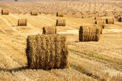 Bales of straw background with copy space. Lots of bales of straw at the agricultural field. Authentic farm series