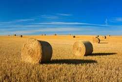 Bales of Straw in Endless Stubble Field during Harvest, Summer Landscape under Blue Sky