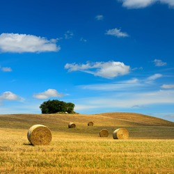 Bales of Straw in Stubble Field during Harvest, Summer Landscape of Rolling Hills under Blue Sky