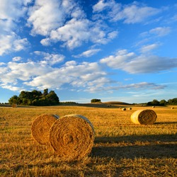 Bales of Straw in Stubble Field during Harvest, Summer Landscape, Rolling Hills, Blue Sky