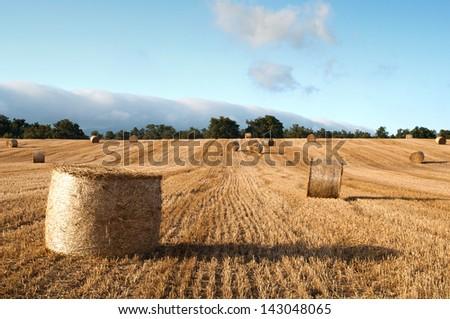 Bales of straw in the wheat fields, Burgos, Spain