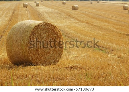 Bales of straw on the field.