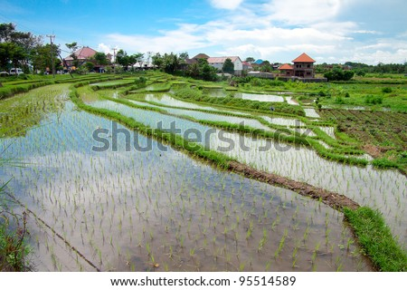 Bali counryside with rice terraces