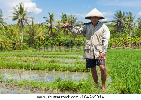 BALI-FEB. 15:Farmer with wooden tool to prepare paddy field on February 15, 2012 in Bali, Indonesia. Farmers typically plant Green Revolution rice varieties allowing 3 growing seasons yearly.