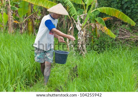 BALI-FEB. 15:Rice farmer using nitrogen fertiliser on his field on February 15, 2012 in Bali, Indonesia. The UN says world rice harvest for 2012 should top 2011 crop, thanks to gains in Asia.