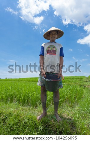 BALI-FEB. 15: Rice farmer using nitrogen fertiliser on his field on February 15, 2012 in Bali, Indonesia. The UN says world rice harvest for 2012 should top 2011 crop, thanks to gains in Asia.