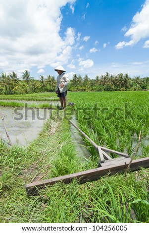 BALI-FEB 15:Unidentified farmer uses wooden tool to prepare paddy field on February 15, 2012 in Bali, Indonesia.Farmers typically plant Green Revolution rice varieties allowing 3 paddy seasons yearly.