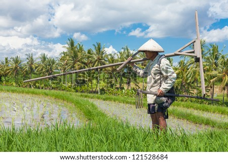 BALI - FEBRUARY 15. Farmer with wooden tool to prepare paddy field on February 15, 2012 in Bali, Indonesia. Farmers typically plant Green Revolution rice varieties allowing 3 growing seasons yearly.