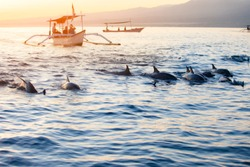 Bali Indonesia free Dolphin boat Watching at Lovina Beach