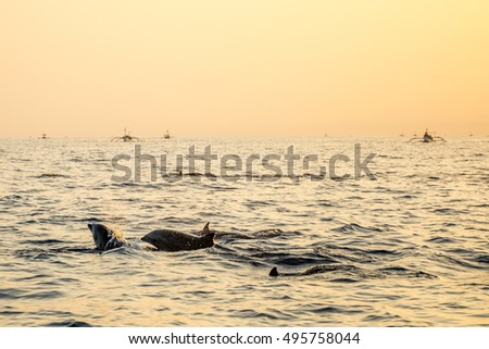 Stock Photo Bali Indonesia free Dolphin boat Watching at Lovina Beach 6