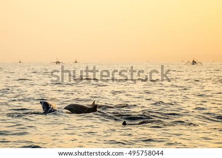 Stock Photo Bali Indonesia free Dolphin boat Watching at Lovina Beach 6