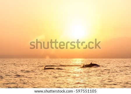 Stock Photo Bali Indonesia free wildlife Dolphin boat Watching at Lovina Beach