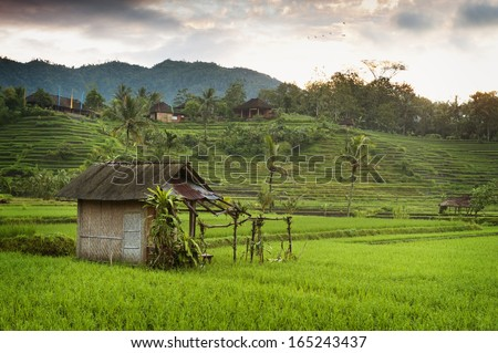 Bali Sunrise in the Rice Fields. The most beautiful rice terraces in all of Bali can be seen in the village of Sidemen, Bali, seen here at dawn.