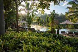 Bali ubud pool in jungle
