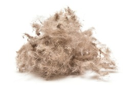 Ball of animal hair fur, cat or dog hair on the white background.