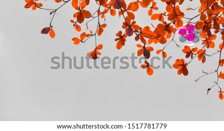 Balloon and autumn tree on sky with copy space, Copy space background with balloon