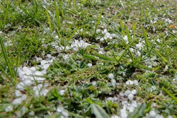Balls of ice on green grass, which form in thunderstorms. Not hail. Maybe soft hail, graupel, ice pellets.