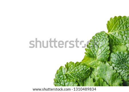 Balm mint leaves isolated on white. Empty copy space green lemon balm leaf studio background. #1310489834