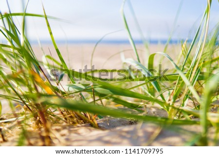 Baltic coast. Beach. Trawa na plaży. Zdjęcia stock ©