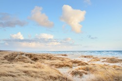 Baltic sea shore (desert, beach) under blue sky with glowing sunset clouds. Sand dunes and plants (dune grass, Ammophila). Denmark. Nature, environmental conservation, ecotourism. Picturesque scenery
