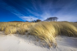 Baltic Sea with golden yellow beach oats in the sunlight, winter on the Baltic Sea and grasses on the beach, nice weather on the coast and beach oats in the wind