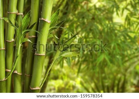 Bamboo #159578354