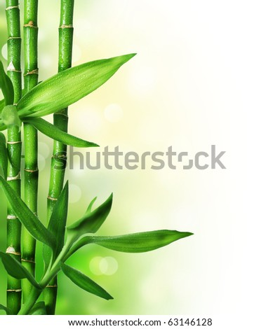 Bamboo #63146128