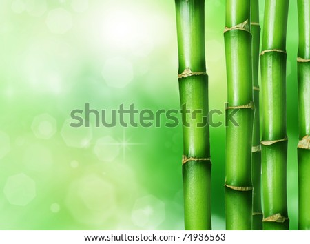 Bamboo #74936563