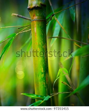 Bamboo #97351415