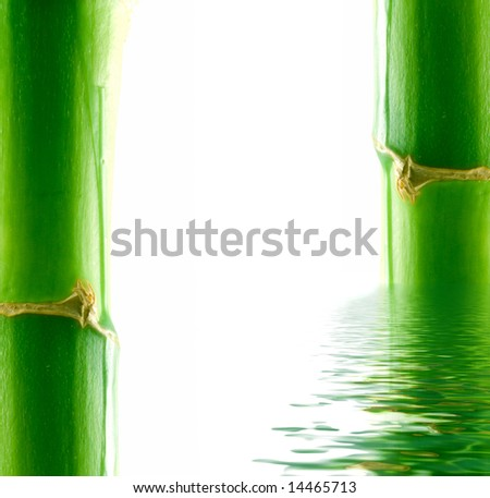 Bamboo and water. Isolation on white