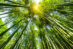 bamboo area mountain in Shunan Bamboo Sea national park in yibin,Sichuan province,China