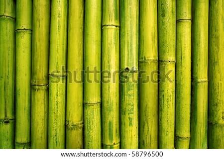 bamboo background - stock photo