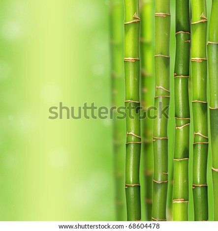 Bamboo background #68604478