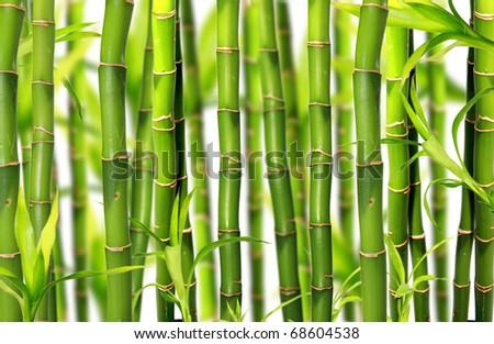 Bamboo background #68604538