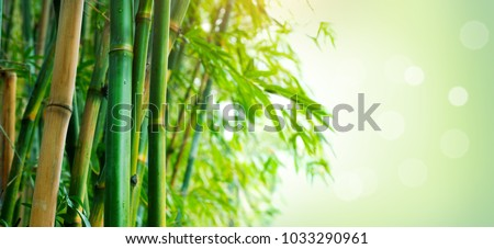 Bamboo. Bamboos Forest. Growing bamboo border design over blurred sunny background. Space for your text. Wide angle banner #1033290961