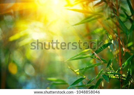 Bamboo. Bamboos Forest. Growing bamboo border design over blurred sunny background. Space for your text. Nature backdrop #1048858046