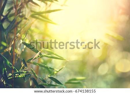 Bamboo Bamboos