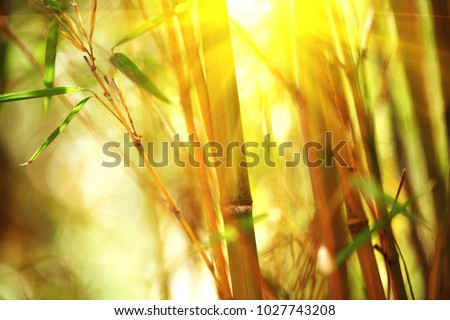 Bamboo. Bamboos Forest. Growing bamboo border design over blurred sunny background. Sun flare #1027743208
