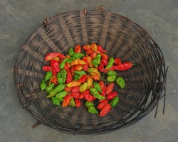 Bamboo basket with colorful extremely hot chili peppers or capsicum chinense on a market in Daporijo, Arunachal Pradesh, India