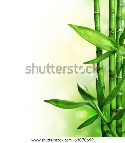 Bamboo Border #63070699