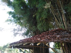 Bamboo building and classical background