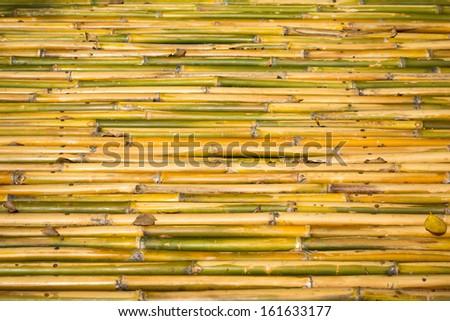 bamboo closeup - nice background pattern