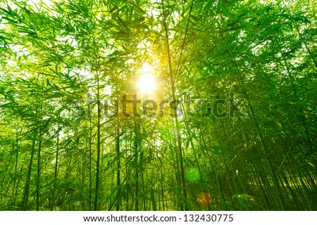 Bamboo forest, #132430775