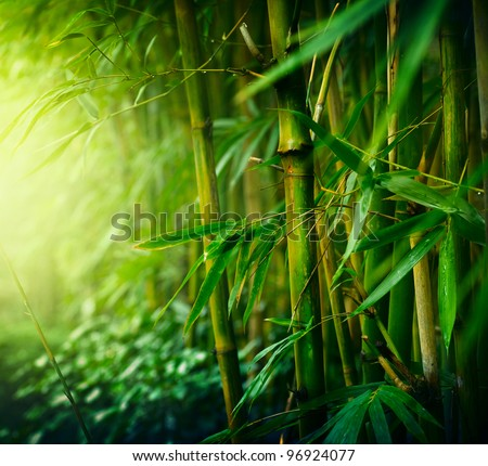 Bamboo Forest #96924077