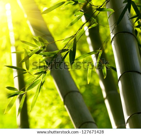 Bamboo forest background Shallow DOF