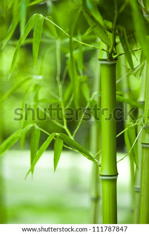 Bamboo forest, bamboo forest in China has special cultural symbol, clean, proud,