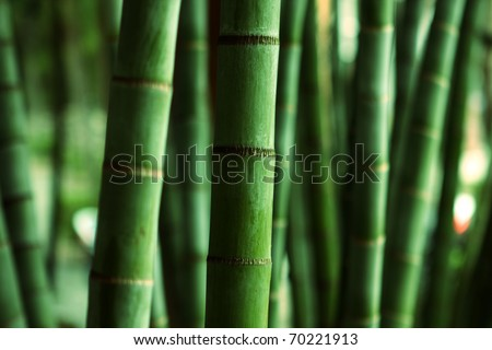Bamboo Forest close up at day #70221913