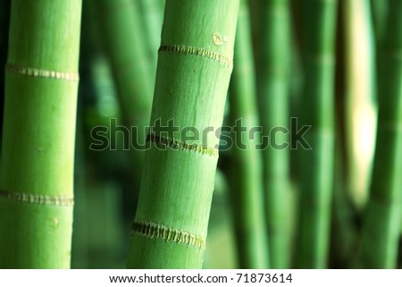 Bamboo Forest close up at day